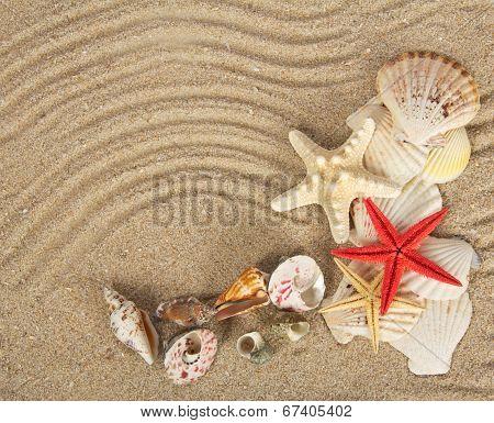 Beautiful cockleshells and starfishes