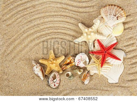 Beautiful cockleshells and starfishes