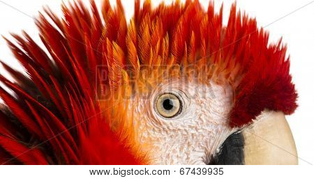 Close-up on a Scarlet Macaw's eye (4 years old) isolated on white