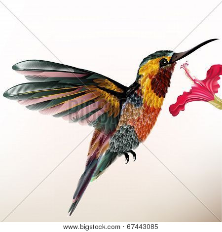 Beautiful Colorful Hummingbird With Flower