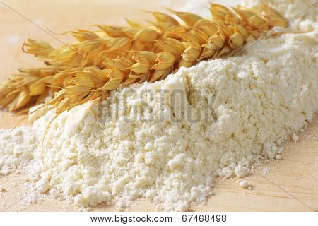 pile of soft flour with ripe wheat ear