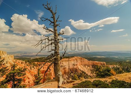 Bristlecone Pine Trail - Bryce Canyon