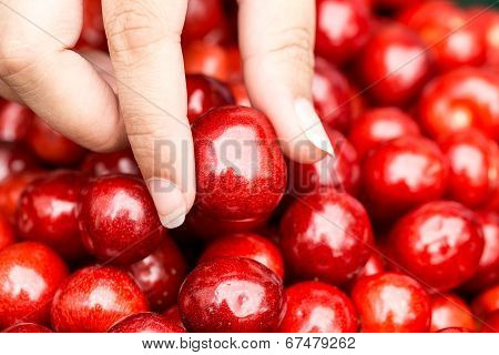 Fresh Delicious Cherry In Woman Hand, Closeup