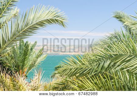 Lake Kinneret Or Sea Of Galilee In The Frame Of Palm Fronds