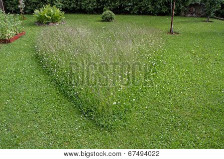 Heart-shaped Herb