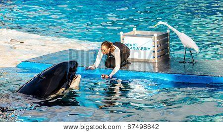 Seaquarium Miami, Floride