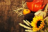 stock photo of corn  - Autumn composition  - JPG