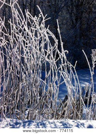 Snow 613