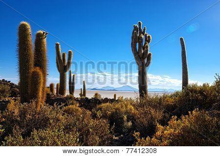 Incahuasi Cactus Hill Uyuni Desert