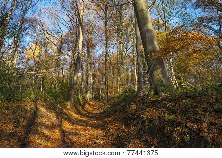 Hollow way in a sunny forest in autumn