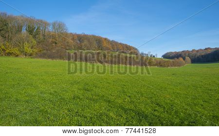 Forest along a hilly meadow in sunlight at fall