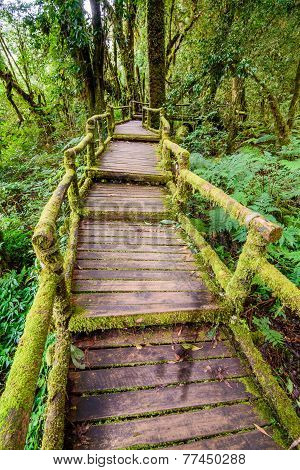 Beautiful Rain Forest At Ang Ka Nature Trail In Doi Inthanon National Park,chiang Mai, Thailand.