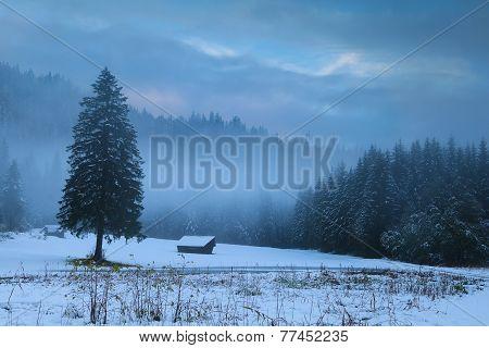 Winter Foggy Morning On Alpine Meadow