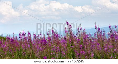 Flowers At The Mountains
