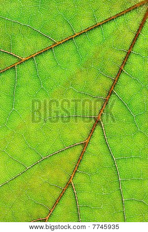 Leaf Background vertikale