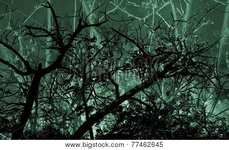 Leafy Dark Nature Background