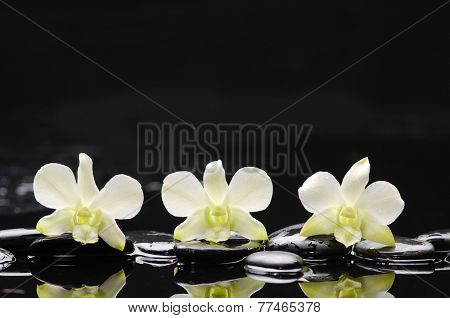 Set of three white orchid with therapy stones