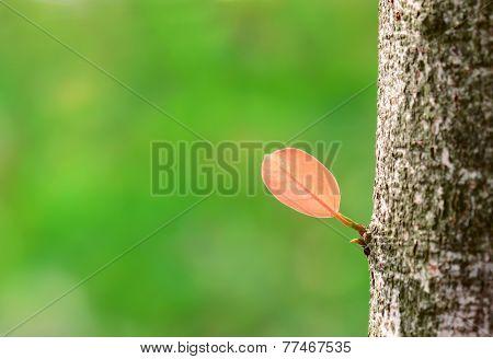 New leaf on old bark