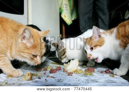 Three Cats Eating Food Scraps From The Floor