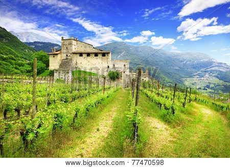 vineyards of Tuscany