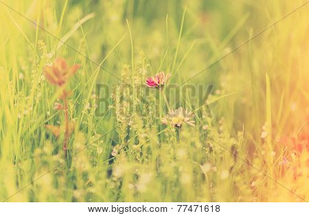 green grass and daisies, summer bokeh background, retro film filtered, instagram style