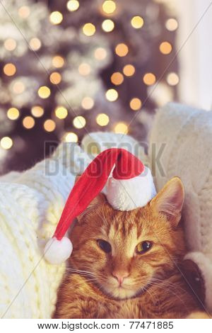 Lovable ginger cat wearing Santa Claus hat looking at camera over Christmas tree at home