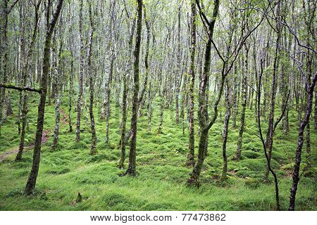 Tussock covered moss and grass in forest.