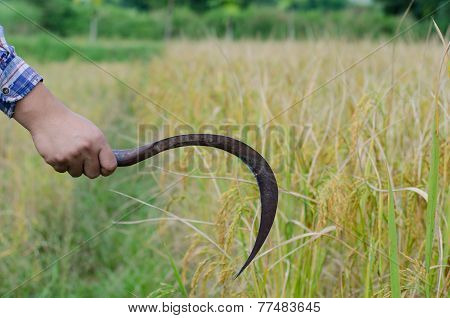 Ear Of Rice And Sickle