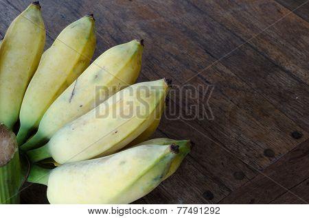 musa sapientum banana