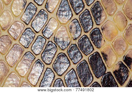 Snake Skin Seamless Pattern Texture