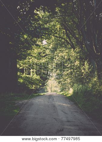 Country Road Alley Lit By Evening Sun. Vintage.