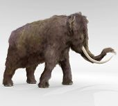 picture of mammoth  - An illustration of the large extinct Woolly Mammoth - JPG
