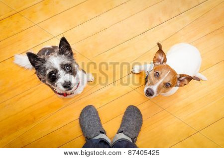 Two Dogs And Ower At Home