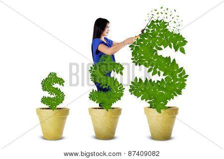 Woman Maintain The Money Tree