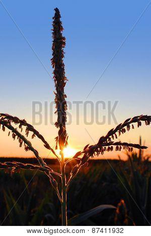 Plant Backlit