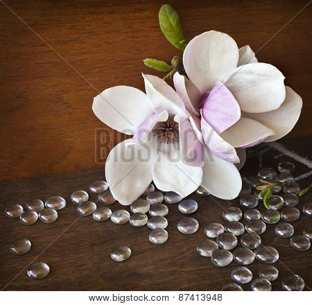 Spring background with magnolia flowers on dark background.