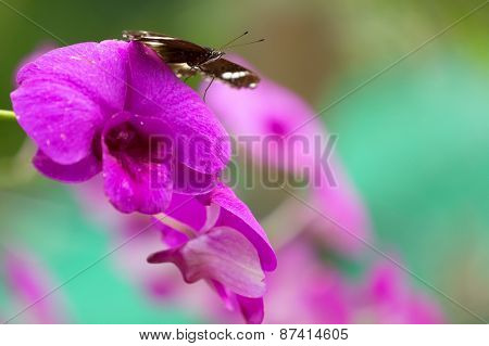Butterfly standing on vivid pink orchid flower in a tropical garden