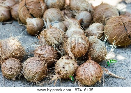 Stack Of Hairy Brown Coconuts