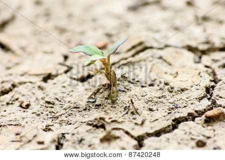Tree Growing Through Dry Cracked Soil