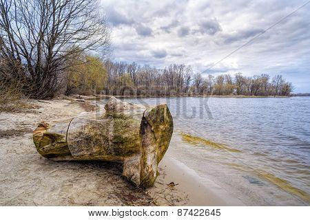 Tree Stump Near The River