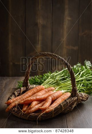 Basket of freshly dug dirty carrots