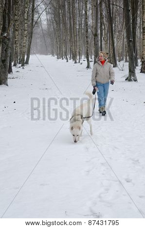 Woman With Dog Walking Down The Avenue In The Winter.