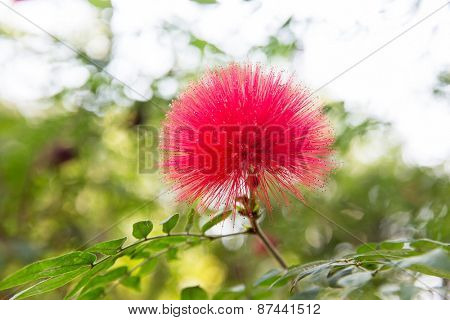 gardening, botany and flora concept - beautiful exotic flower at garden or park