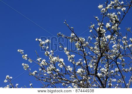 Blooming branch of apple tree with many flowers over blue sky