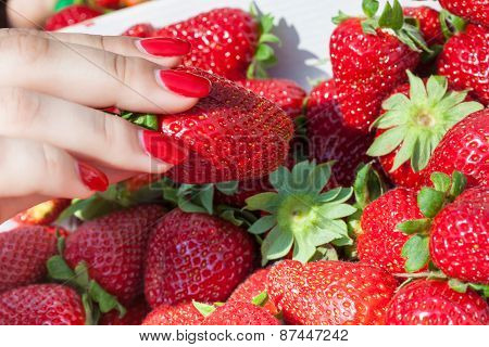 A basket with juicy strawberries