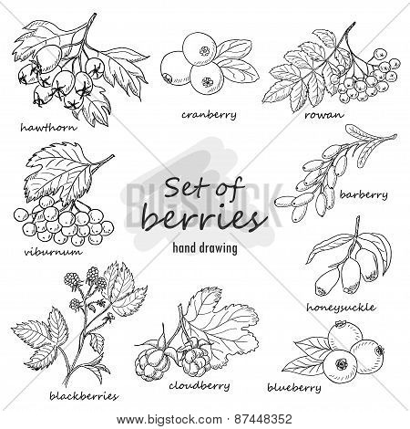 Set Of Forest Berries