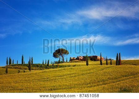Summer Landscape In Tuscany With A Field, Cypresses And The Farmer House Under The Bright Blue Sky