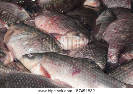 Fresh Fish Crucian Is Sold At The Bazaar