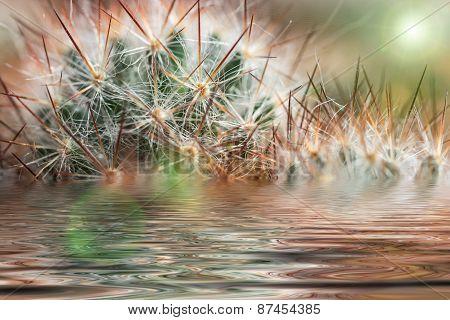 Cactus Needles Water Reflection