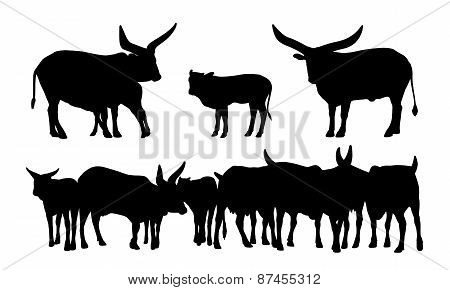 Sacred African Cows Silhouettes Set